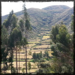 Terraces near Ollantaytambo Peru © Twyatt 2014